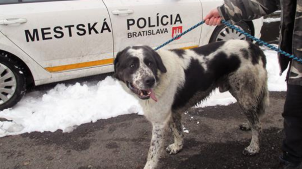 Zachránený pes
