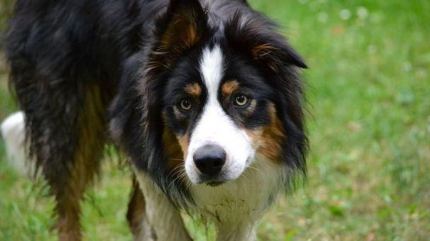 Pes priateľ človeka - Máte doma psa?